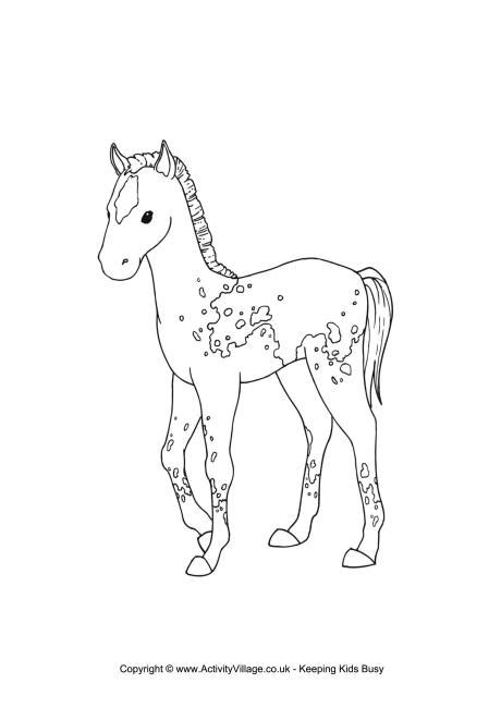 foal colouring page