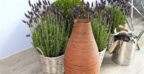 piante aromatiche in cucina piante aromatiche profumo di natura in casa dalani