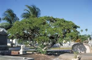 Home Landscape Design lignum vitae tree selection landscape plants edward