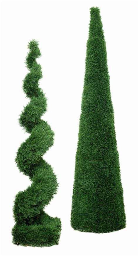 topiary plants poplar tree florist durham newcastle