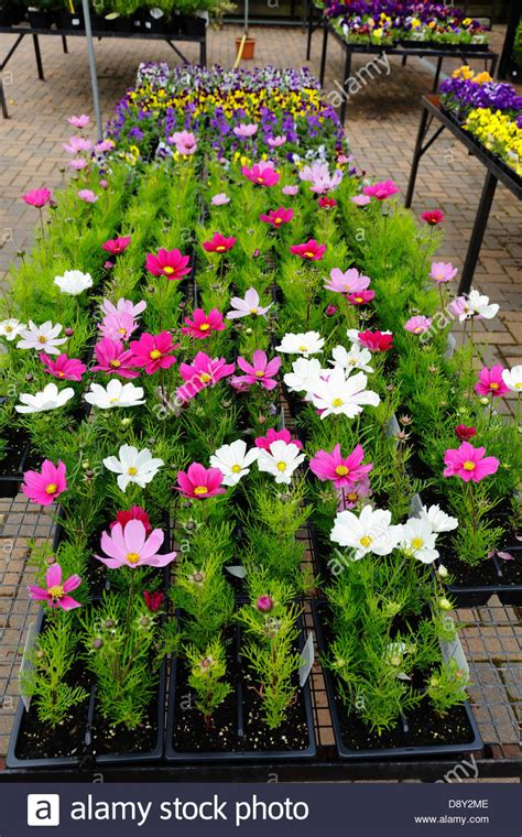 summer bedding plants  sale   garden centre