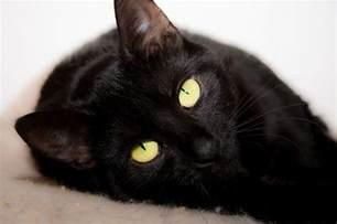 15 clever names for black cats iheartcats com