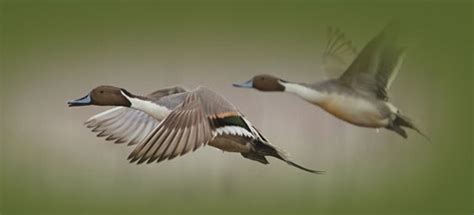 2013 ducks unlimited sweepstakes winners - Ducks Unlimited Sweepstakes