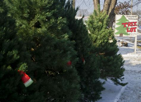 christmas tree lots chicago photos wreaths 11 30 14 local winonadailynews