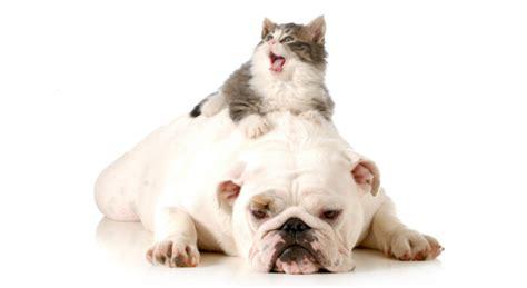pericoli in casa pericoli in casa per e gatto come evitare gli