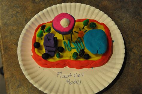 3d plant cell diagram project pictures on a page science project