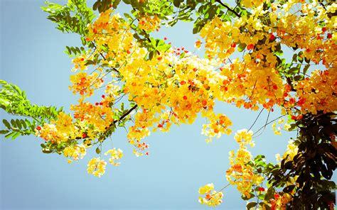 summer flowers wallpaper beautiful desktop wallpapers 2014 pretty summer screensavers 21535 2560x1600 px