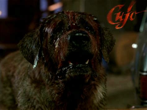 cujo the cujo horror legends wallpaper 25727076 fanpop page 2