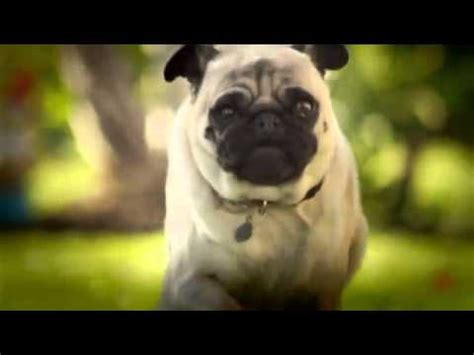 pug attack dorito s pug attack one of all time favorite bowl commercials the waggington