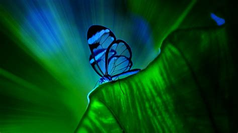 imagenes hd azules fondos hd de mariposas azules lanaturaleza es