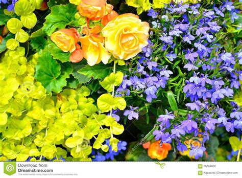 Uk Garden Flowers Cottage Garden Flowers Background Stock Photo Image 56694900