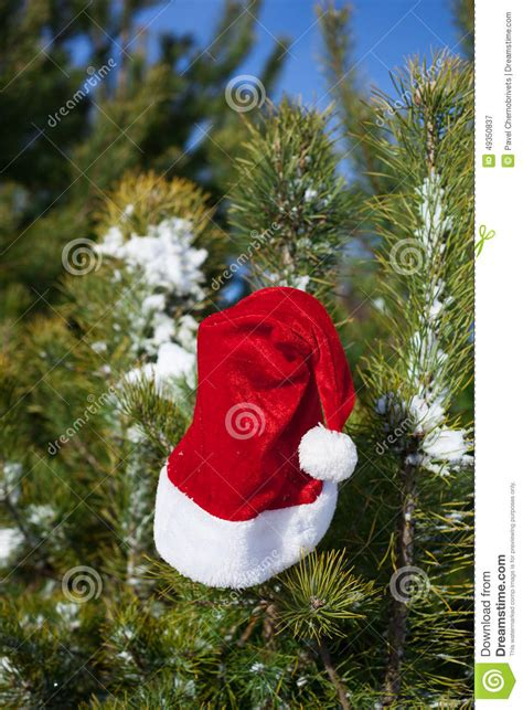 santa hat on spruce tree in forest stock photo image