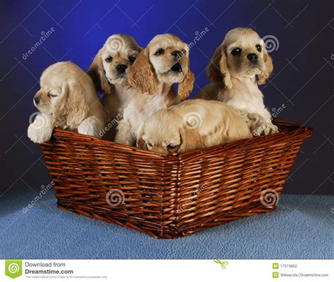 a litter of puppies litter of puppies stock photography image 17574852