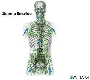 infiammazione vasi linfatici sistema linfatico osteopata it osteopata a roma nord