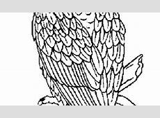 coloring page eagle 01 | rigalia | Pinterest | Eagle ... Eagle Coloring Pages Free