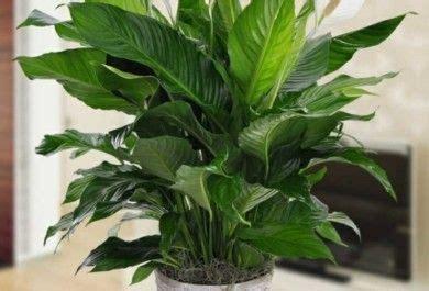 Pflanzen Ohne Licht by Zimmerpflanzen Ohne Licht Zimmerpflanzen Die Mit Wenig