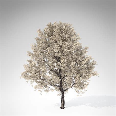 cherry tree 3ds max xfrogplants yoshino cherry tree 3d model max obj 3ds c4d lwo lw lws ma mb cgtrader
