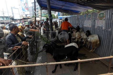 ahok larang kurban di sekolah jelang idul adha ahok larang penjualan hewan kurban