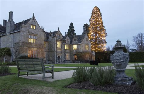the largest christmas tree in britain at wakehurst place