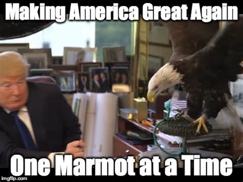 Making A Meme - trump eagle attack imgflip