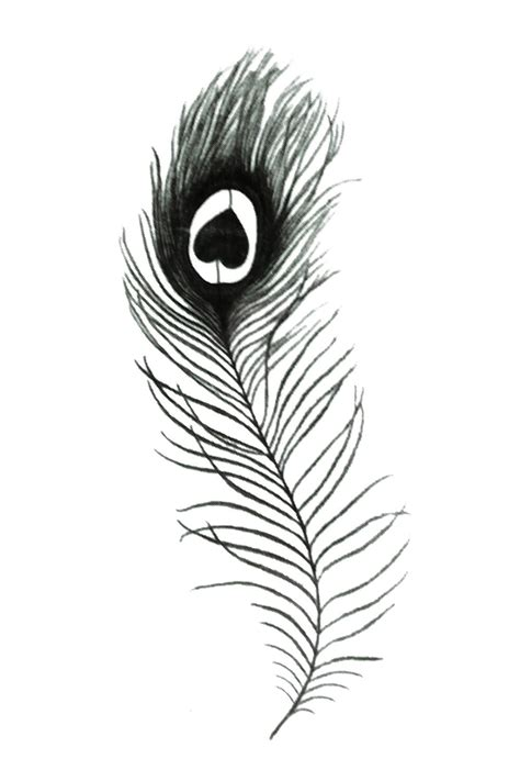 black feather tattoo designs peacock feather designs black and white