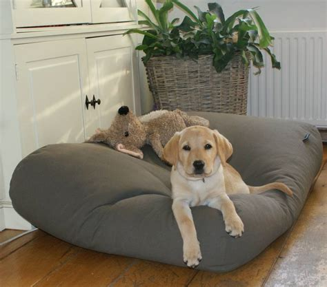 dogs in bed dog s companion 174 dog bed mouse grey dog beds by dog s