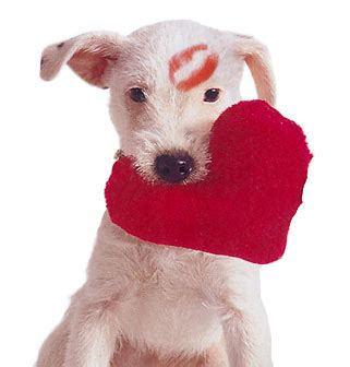 puppies with hearts all pet news