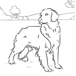 Online Coloring Pages Of Your Favorite Dog Breed Golden Retriever Coloring Pages