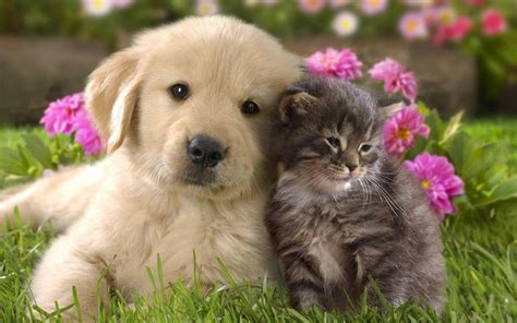 cute dogs and puppies wallpapers wallpaper cave cat and dog wallpapers wallpaper cave