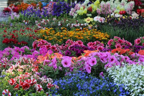 fiori italia piante e fiori simboli e significati nella storia dell