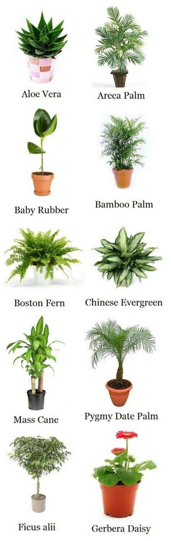 palme zimmerpflanze arten zimmerpflanzen arten bilder den beliebtesten