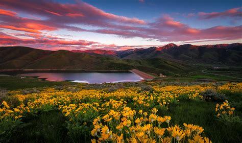 east canyon wildflower sunset utah landscape photography