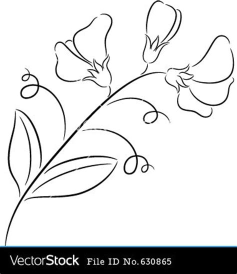 sweet pea flower design www pixshark com images