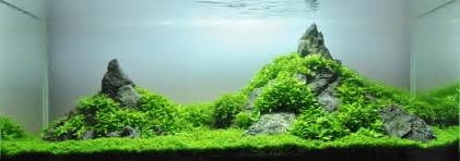 what is aquascaping a guide to aquascaping the planted aquarium
