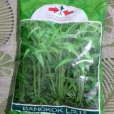 Benih Kacang Panjang Kanton Tavi benih seledri titus 100 biji johnsons seeds bibitbunga