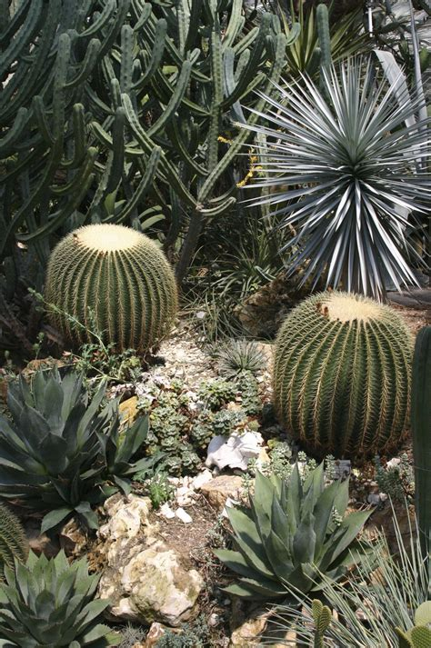 cactus planter cactus plant facts that are simply quite fascinating