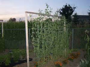 trellis support vertical supports for trellising vegetables veggie