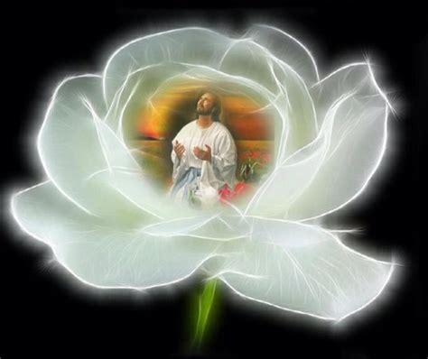imagenes de jesus flores imagem de jesus cristo em flor de rosa branca imagem 1243