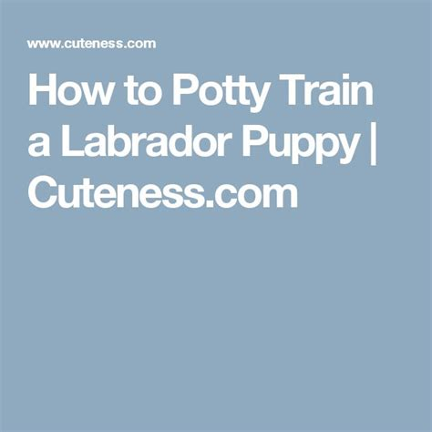 how to potty a lab puppy 25 best ideas about miniature labrador on lab puppies black lab puppies
