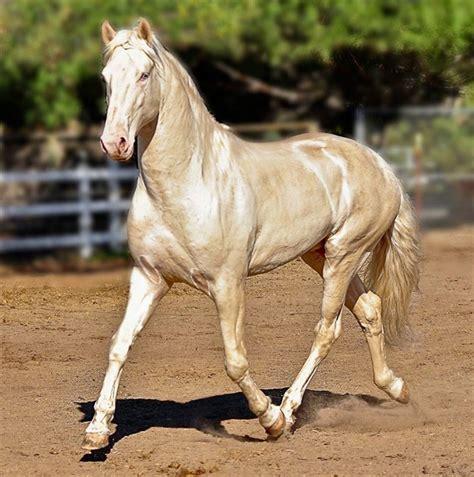 colores de cabellos bonitos este es probablemente el caballo m 225 s bonito del mundo