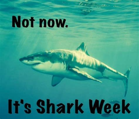 Funny Shark Memes - 17 best images about shark week on pinterest shark week