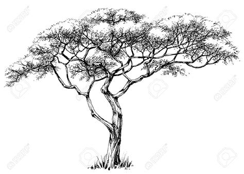 tatoo stock images royalty free tree marula tree royalty free cliparts vectors