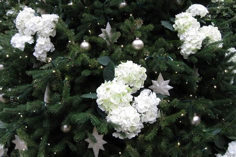 hydrangea christmas tree flowers pinterest