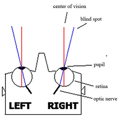 Blind Spot Human Eye you re blind well sort of hendrickson sed695b4