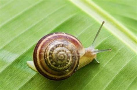 un caracol a snail 8426350941 entre zebras y caracoles irconni 241 os com