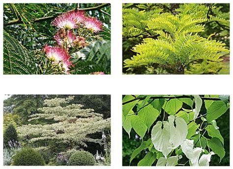 Quel Arbre Planter Dans Jardin by Crit 232 Res Pour Le Choix D Un Arbre 224 Planter Dans Jardin