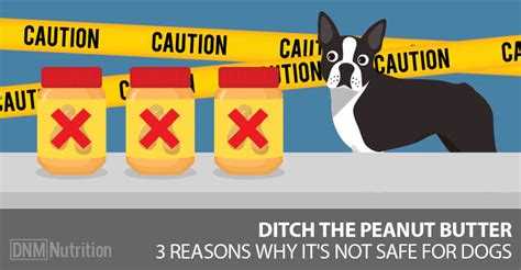 is peanut butter ok for dogs can dogs eat peanut butter 3 reasons peanut butter isn t safe