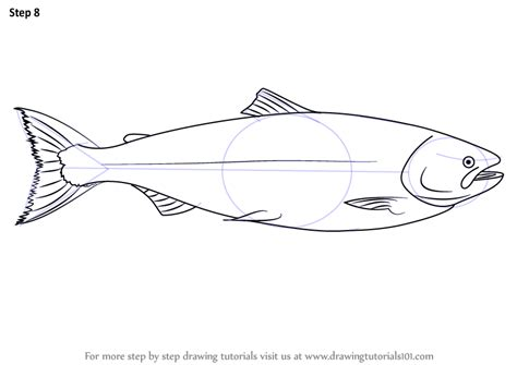 learn   draw  salmon fishes step  step drawing