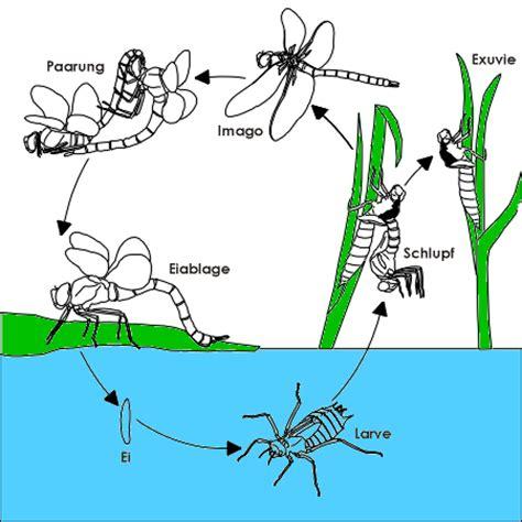 Lebenslauf Englisch Vokabel Rastafari Libellenflug Biotechnik
