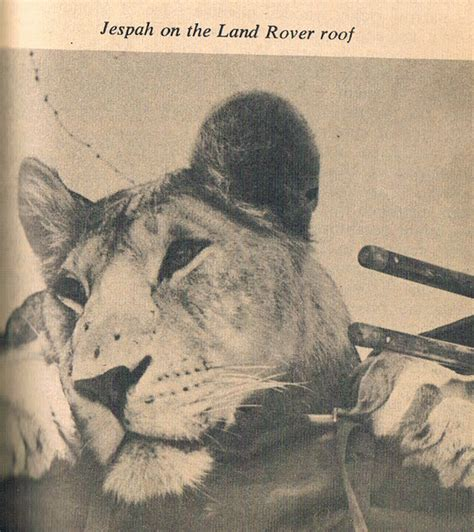 sworn to the the wisdom s grave trilogy books the rebel reader born free trilogy with elsa the lioness